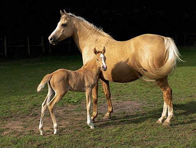 Horse with Colt Image