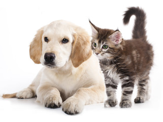 Puppy and Kitten Image